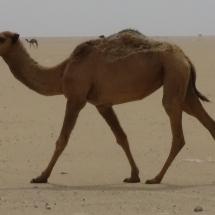 kuwejt-2015-44